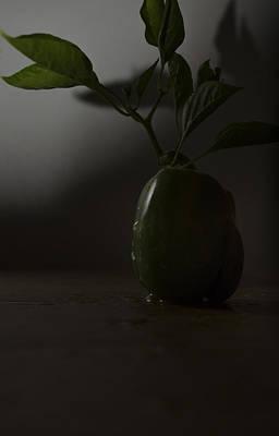Photograph - Pepper Shadow-566 by Rae Ann  M Garrett