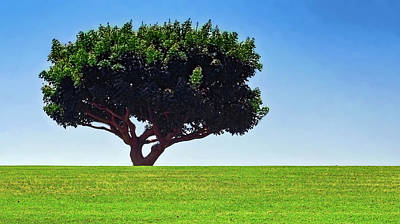 Photograph - Pepperdine University Tree by Joseph Hollingsworth