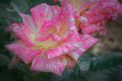 Photograph - Peppermint Rose by Larry Bishop