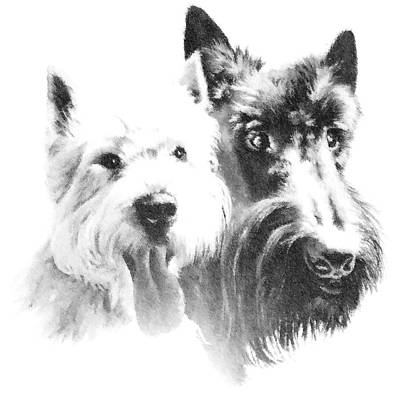 Scottish Dog Digital Art - Pepsi And Max by Charmaine Zoe