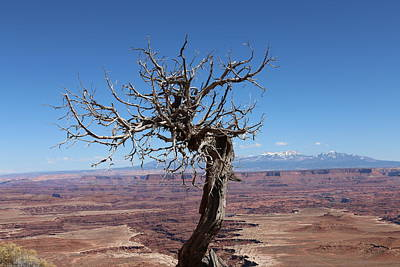 Photograph - Perched Above The Canyons - 2 by Christy Pooschke