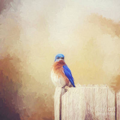 Perched And Pretty Print by Scott Pellegrin