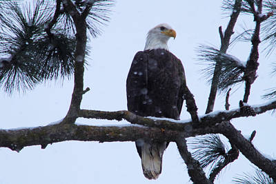 Gelid Photograph - Perched And Proud  by Jeff Swan