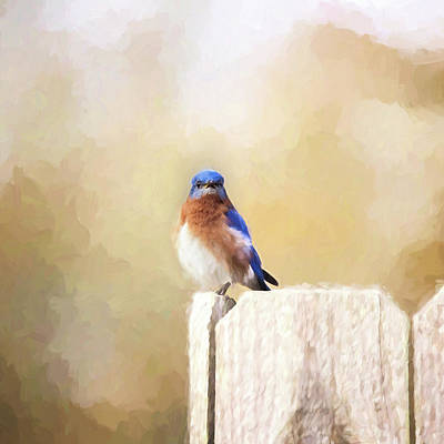 Perched And Ready Print by Scott Pellegrin