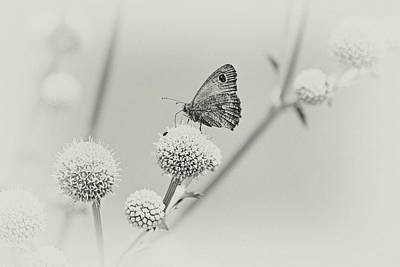 Photograph - Perched Butterfly No. 255-2 by Sandy Taylor