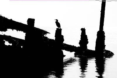 Photograph - Perched Cormorant. by David Hare