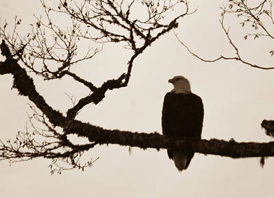Photograph - Perched Eagle by Erin Kohlenberg