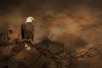 Photograph - Perched Eagle by Lori Deiter