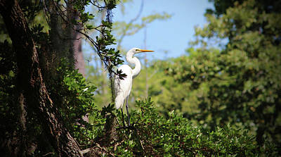 Photograph - Perched Egret by Cynthia Guinn