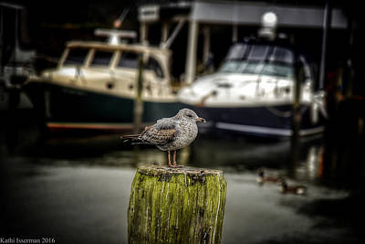 Photograph - Perched II by Kathi Isserman
