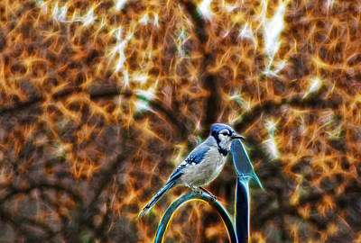 Art Print featuring the photograph Perched Jay by Cameron Wood
