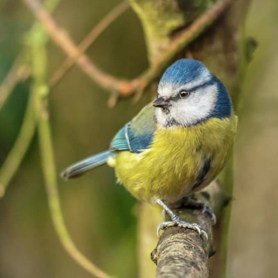 Photograph - Perched by Nick Bywater