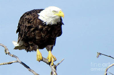 Photograph - Perched On A Tree by Mary Mikawoz