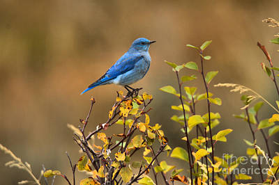 Photograph - Perched On Fall Colors by Adam Jewell