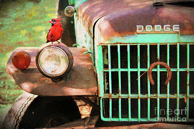 Photograph - Perched On The Old Dodge by Tina LeCour