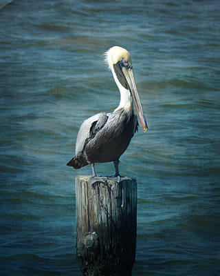 Perched Pelican Art Print by Carla Parris