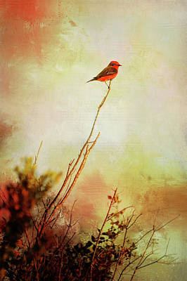 Photograph - Perched Vermilion Flycatcher by Carla Parris