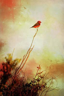 Photograph - Perched Vermilion Flycatcher by Carla Parris