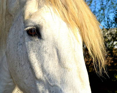 Photograph - Percheron Close Up by Katy Hawk