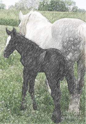 Percheron Colt And Mare In Pasture Digital Art Art Print