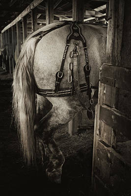Draft Horses Photograph - Percheron Draft Horse by Theresa Tahara