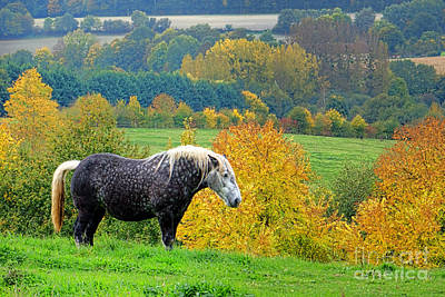 French Countryside Photograph - Percheron In Autumn  by Olivier Le Queinec