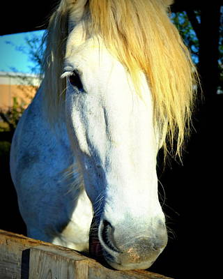 Photograph - Percheron by Katy Hawk