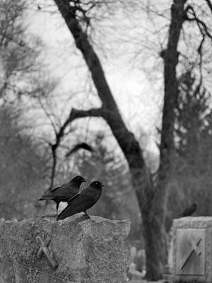 Two Perching Blackbirds At The Graveyard Print by Gothicrow Images