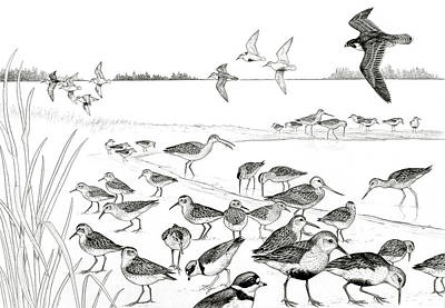 Drawing - Peregrine And Shorebirds by Shari Erickson