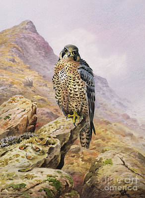 Hawk Painting - Peregrine Falcon by Carl Donner