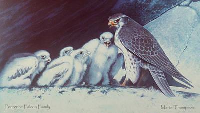 Peregrine Falcon Family Print by Marte Thompson