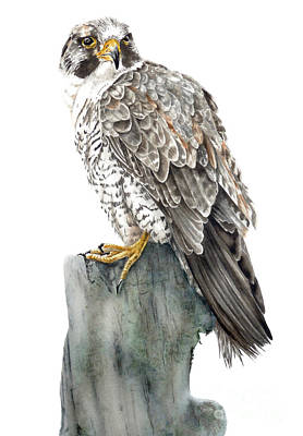 Peregrine Painting - Peregrine Falcon by Marie Burke