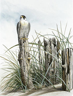 Peregrine Falcon On Post Art Print by Dag Peterson