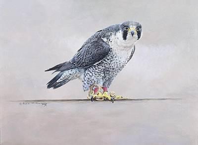 Painting - Peregrine Falcon Portrait by Alan M Hunt