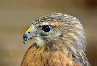 Photograph - Peregrine Falcon Portrait by Sandi OReilly