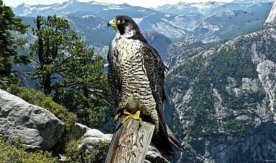Yosemite National Park Mixed Media - Peregrine Falcon, Yosemite Valley, Western Sierra Nevada Mountain, Echo Ridge by Thomas Pollart