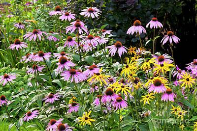 Photograph - Perennial Flower Garden by Alan L Graham