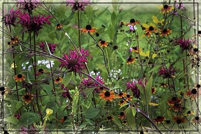 Photograph - Perennial Flowers by Sherman Perry