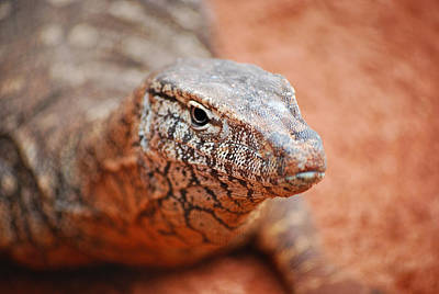 Photograph - Perentie Close Up by Michelle Wrighton