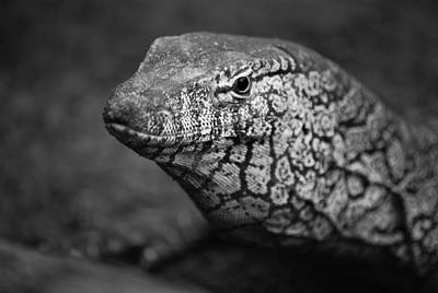 Photograph - Perentie Monitor Lizard - Black And White by Michelle Wrighton
