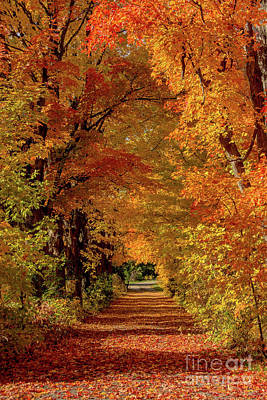 Photograph - Perfect Autumn Laneway by Cheryl Baxter