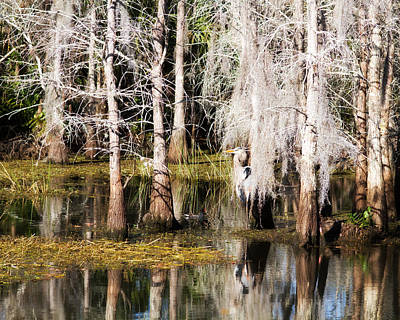 Custom Photograph - Perfect Camouflage by J Darrell Hutto