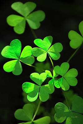 St Photograph - Perfect Green Shamrock Clovers by Christina Rollo