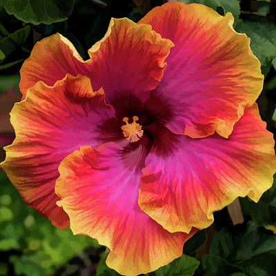 Photograph - Perfect Hibiscus by Gary Eyring