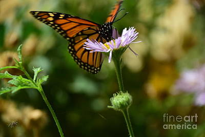 Photograph - Perfect Landing by Johanne Peale