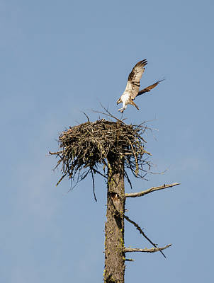 Photograph - Perfect Landing by Loree Johnson
