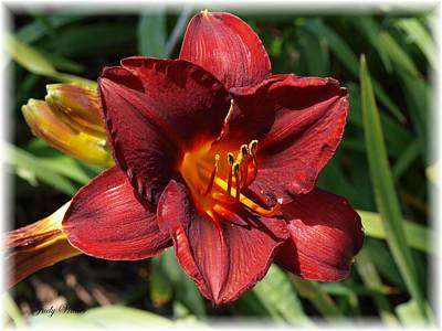 Perfect Lily Art Print by Judy  Waller