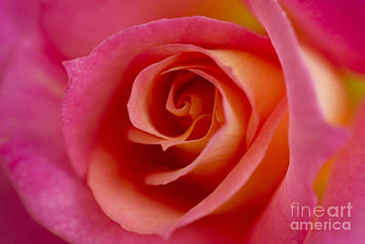 Photograph - Perfect Moment Rose by Jeanette French
