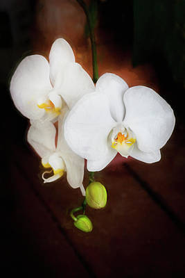 Photograph - Perfect Phalaenopsis Orchid  002 by Rich Franco