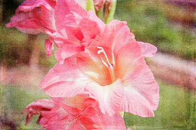 Canna Photograph - Perfect Pink Canna Lily by Toni Hopper